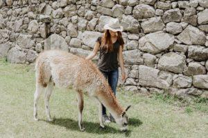 Machu picchu, llama, South America, perú, Cusco