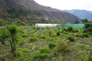 pachamanca lunch, Ollantaytambo, Farm, El Alburque, Urubamba Valley