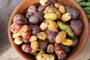 Pachamanca Lunch, Peru, Ollantaytambo, Urubamba Valley, Potatoes