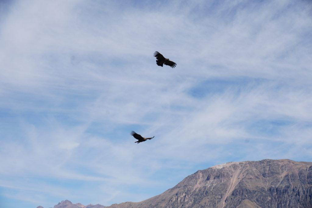 colca canyon, cruz del condor, condors